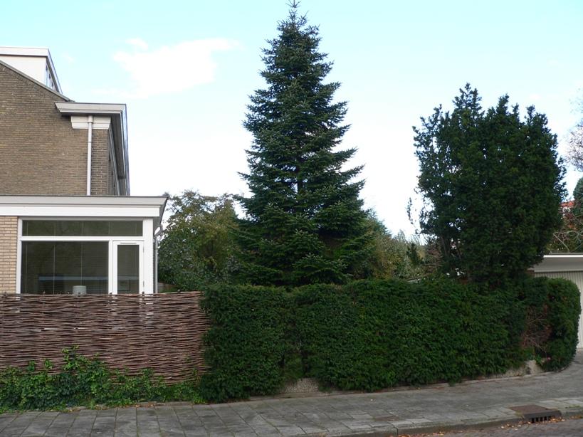 Bomen Op Erfgrens.Bomenstichting Amsterdam